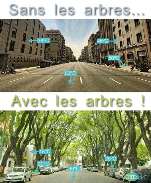 La cause des arbres : Pour faire face au réchauffement climatique en ville :